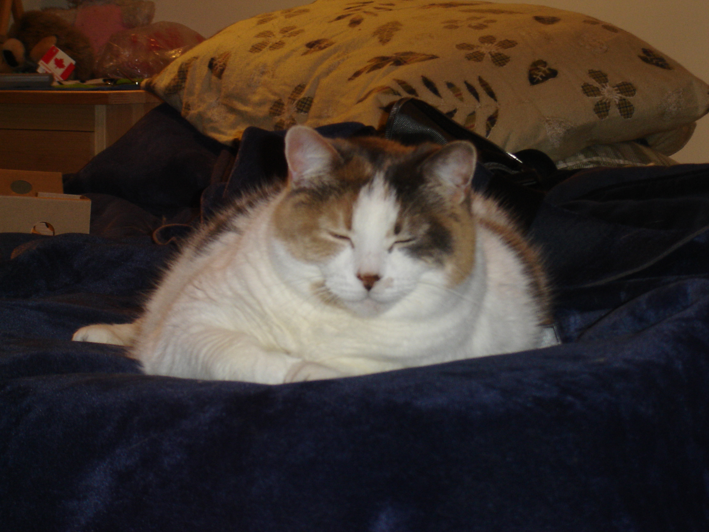 Tamantha. May 5, 1996 - August 5, 2009. You were my Tuna, my real Tuna. We miss you so much.